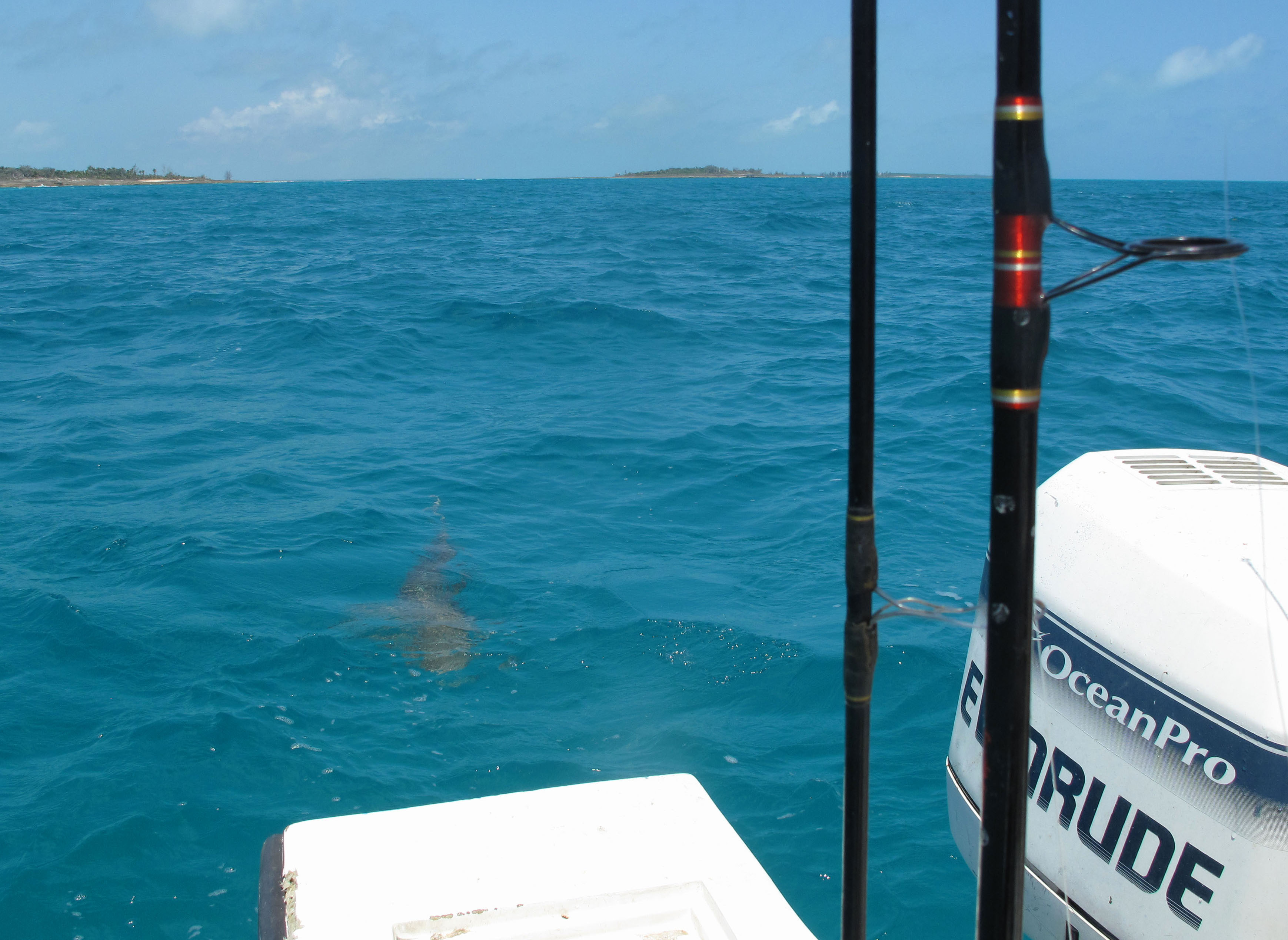 bahamas, abaco, green turtle cay, new plymouth