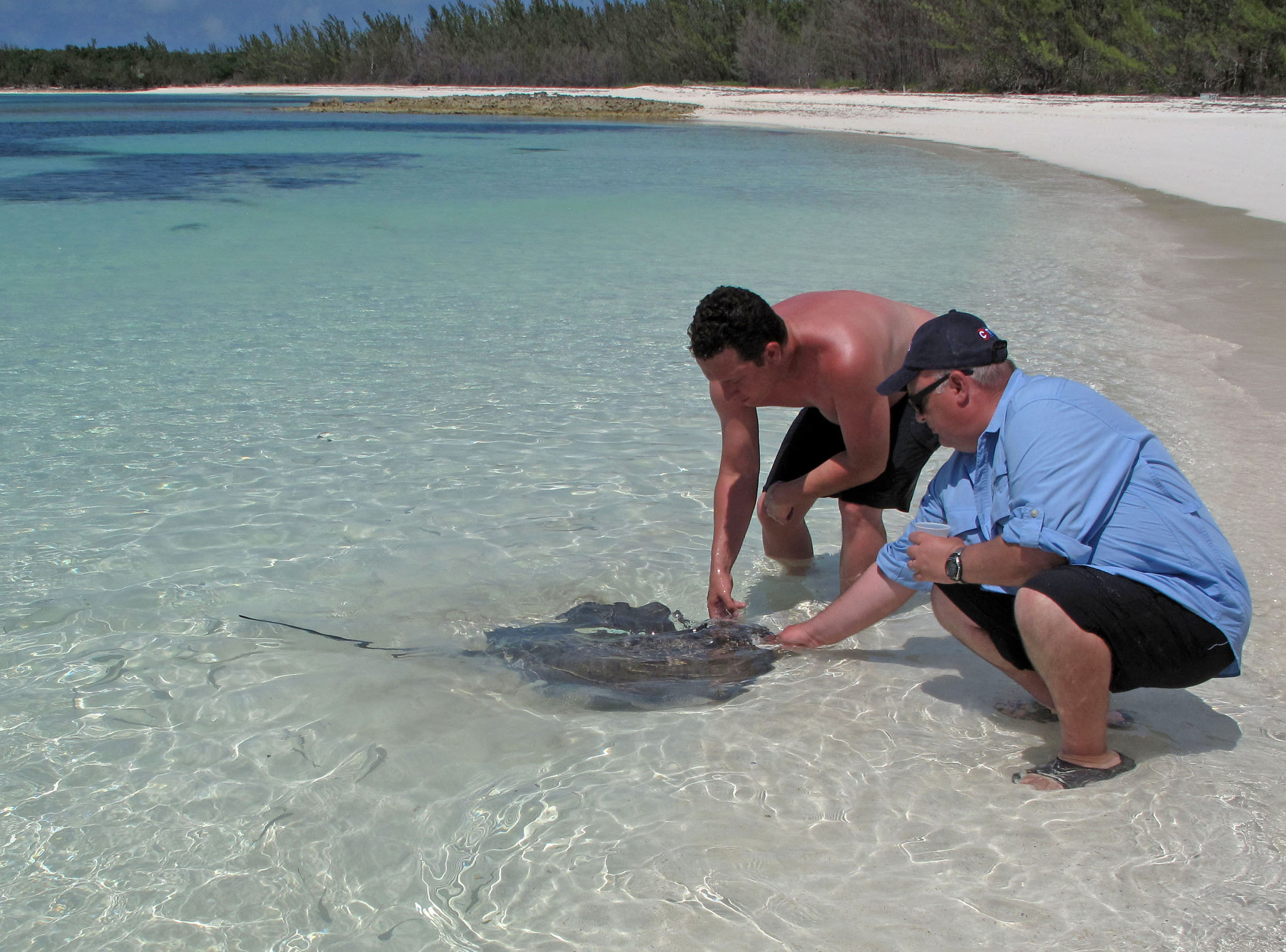 bahamas, abaco, green turtle cay, new plymouth, lincoln jones, sting ray