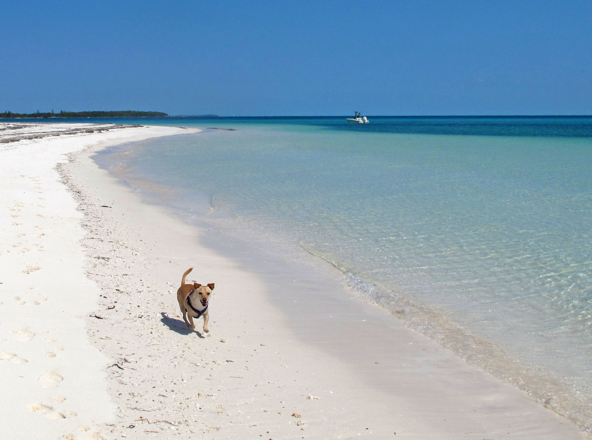 bahamas, abaco, green turtle cay, new plymouth, gillam bay, travel with dog, wrigley, amanda diedrick