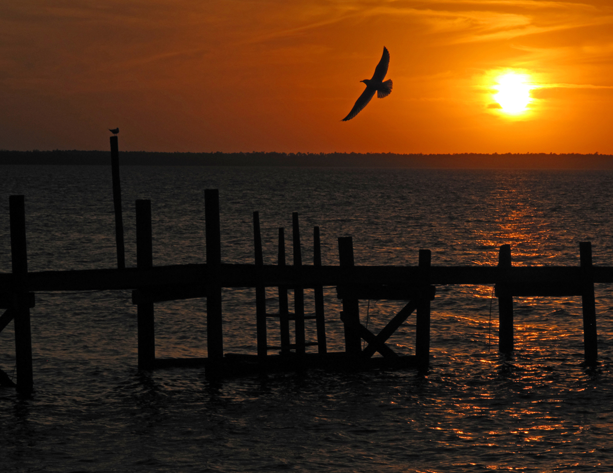 bahamas, abaco, green turtle cay, sunset, seagull