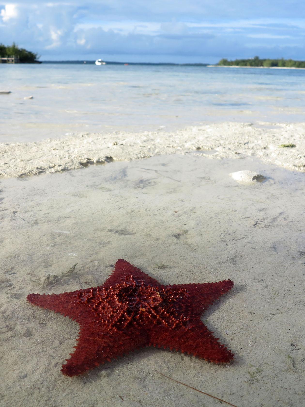 bahamas, abaco, green turtle cay, starfish, coco bay