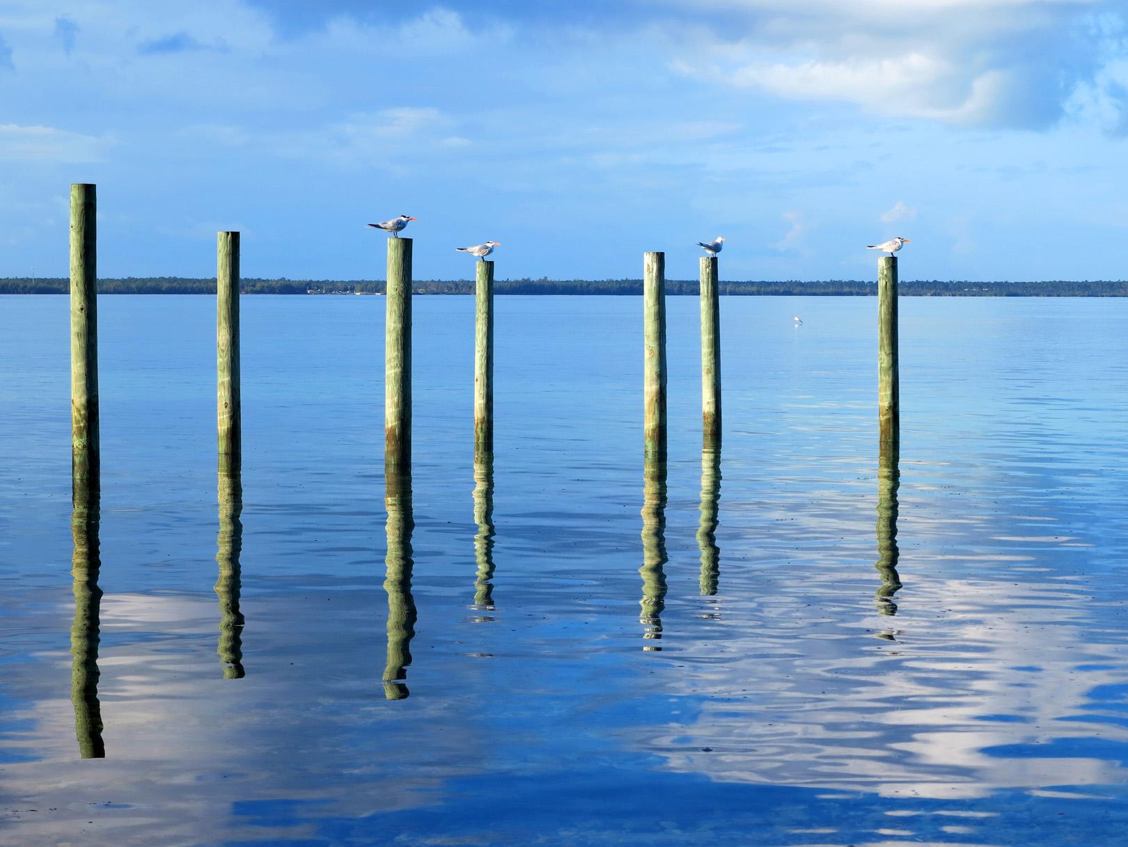 bahamas, abaco, green turtle cay, birds