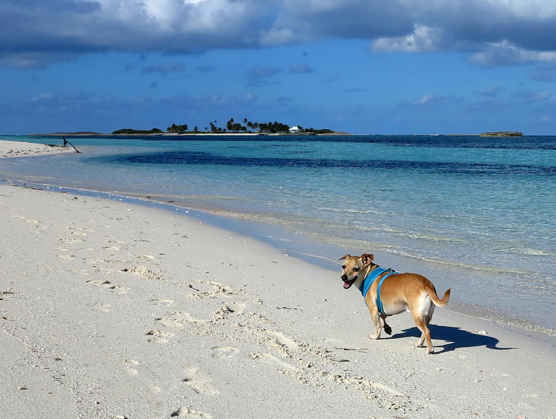 bahamas, abaco, green turtle cay, gillam bay, wrigley