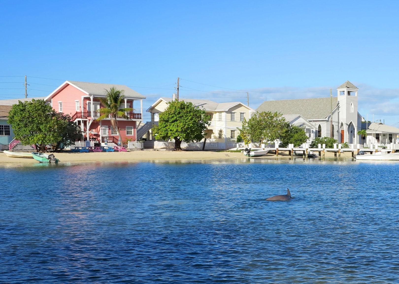 bahamas, abaco, green turtle cay, dolphin