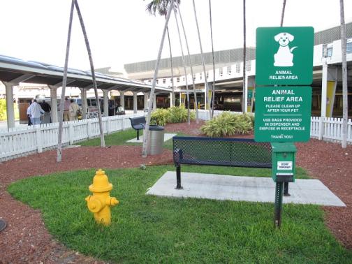bahamas, abaco, miami, miami airport, pet relief area