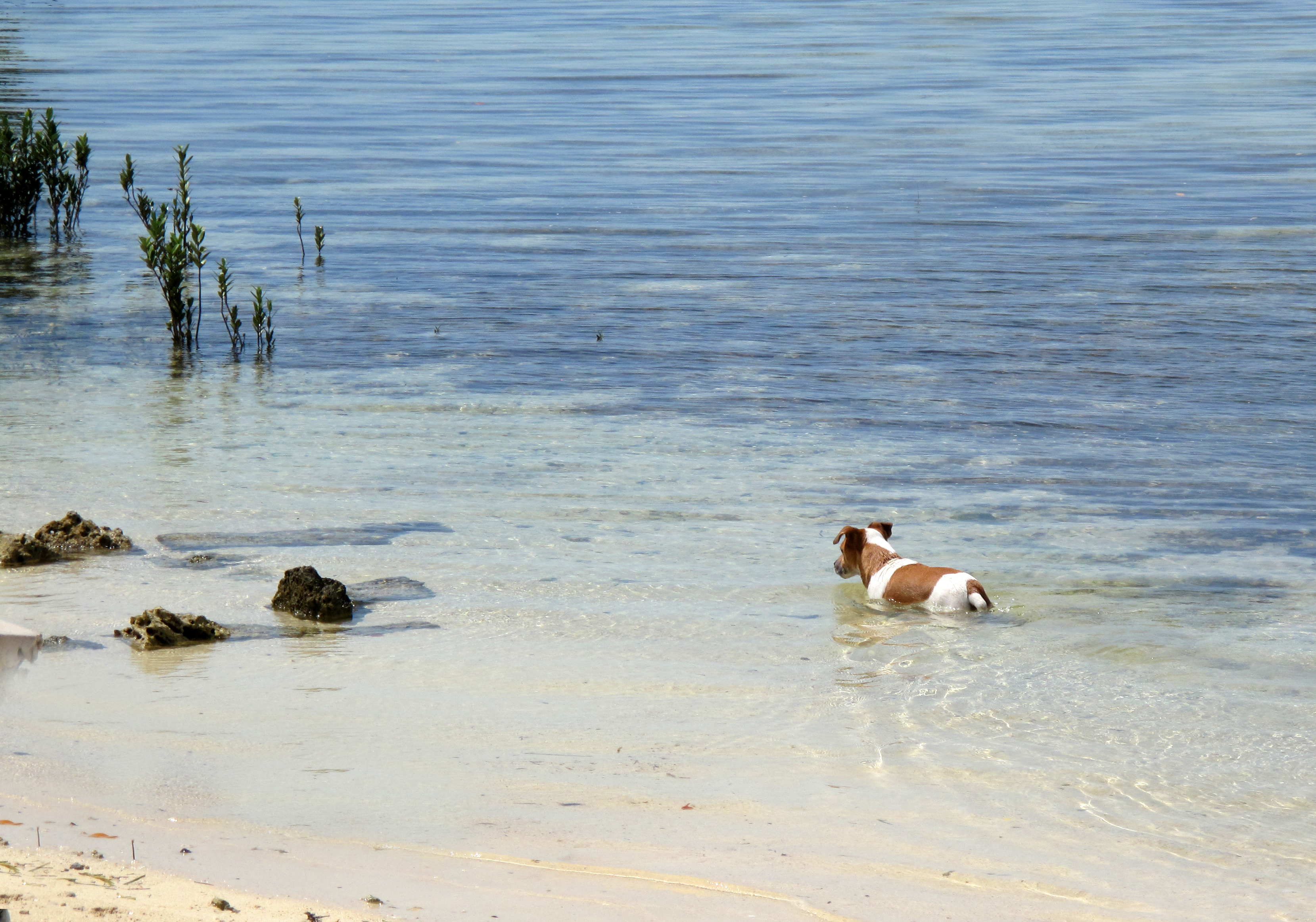 The most human dog I ever met -- Ranger, from Green Turtle Cay, Abaco, Bahamas.