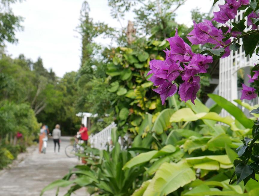 Daily Photo - Street scene in Hope Town, Abaco, Bahamas