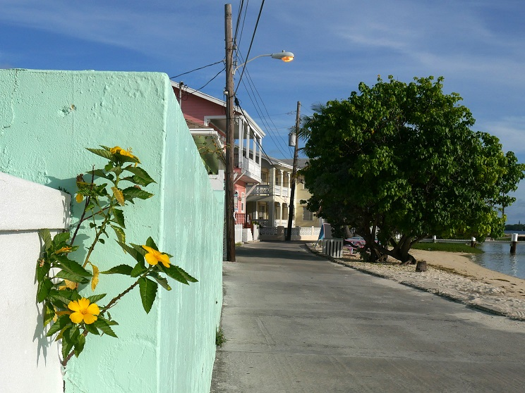Plant grows out of the gap between concrete walls - Green Turtle Cay, Bahamas. www.littlehousebytheferry.com