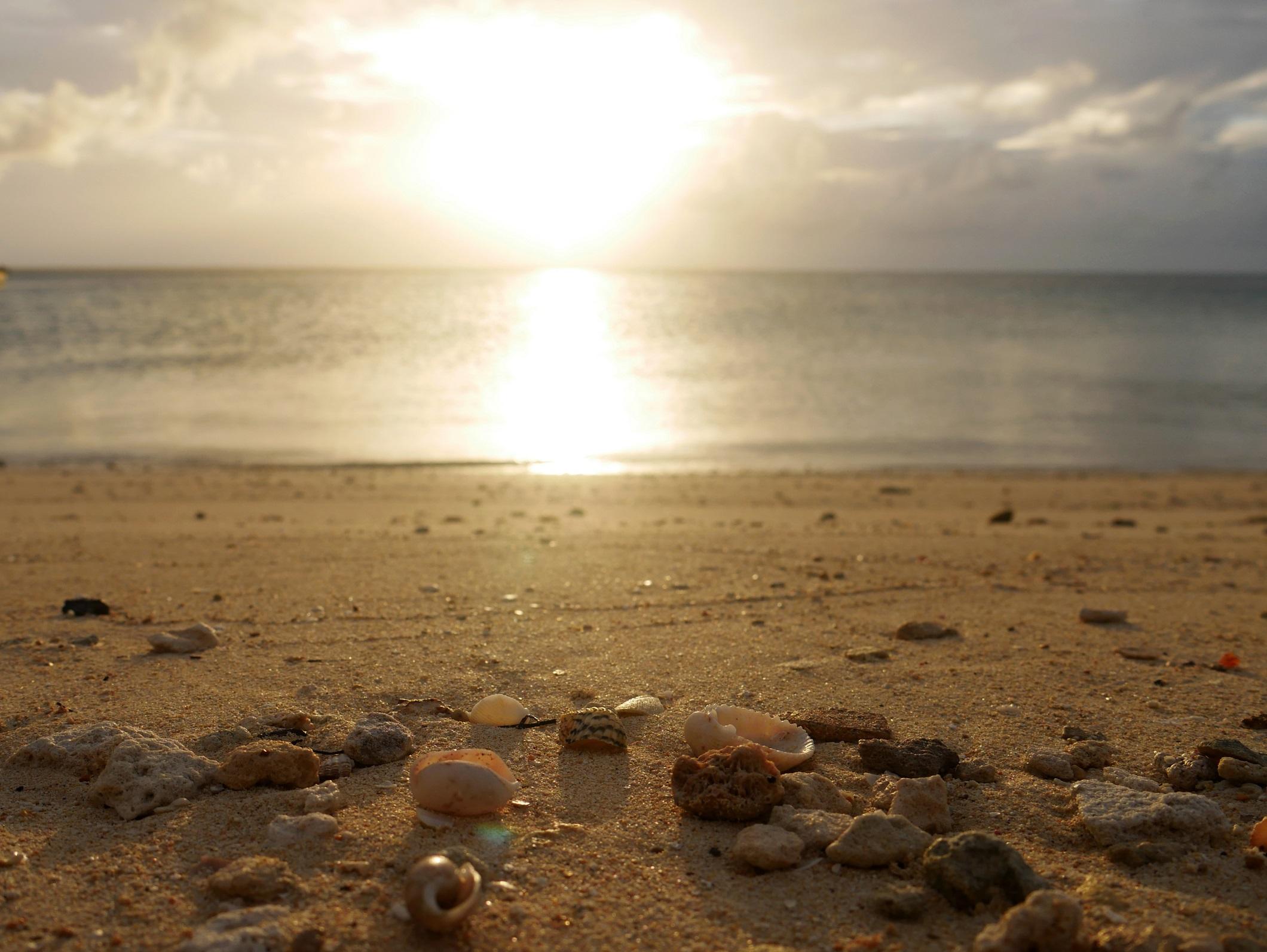 Sunset Seashells - Green Turtle Cay, Abaco, Bahamas