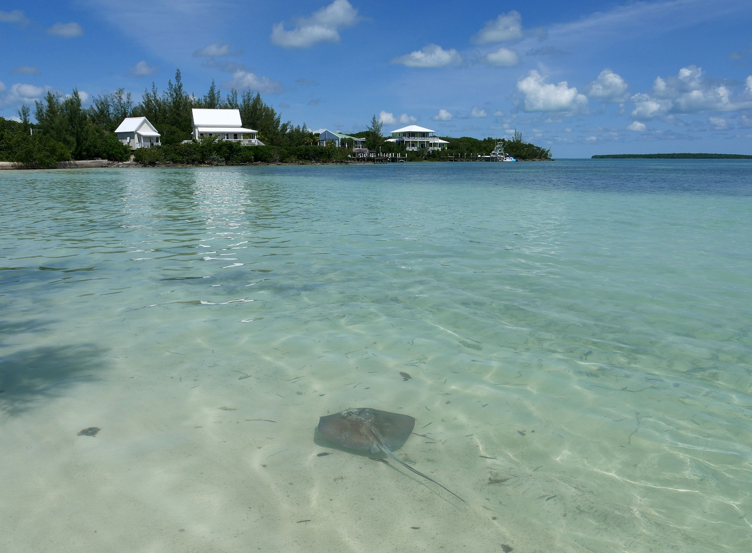 Stingray at Coco Bay - Green Turtle Cay, Abaco, Bahamas
