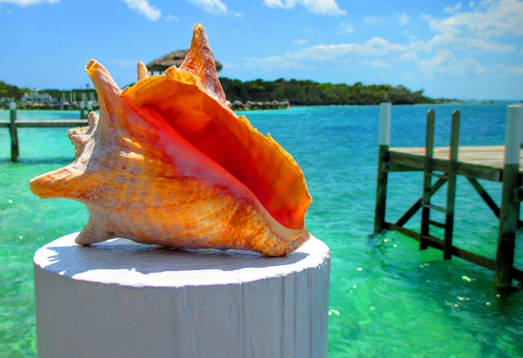 Conch Shell at Hope Town, Elbow Cay