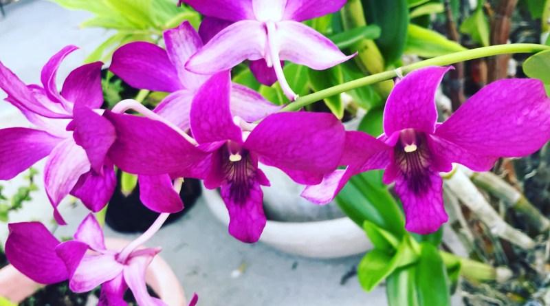 Flowers, Abaco, Bahamas